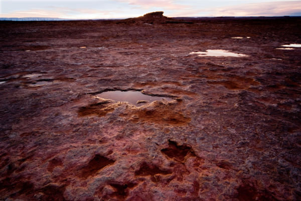 Dinosaur tracks in the Navajo reservation
