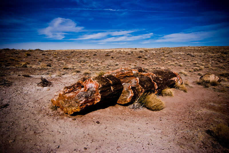 Petrified tree in the Petrified Forest, Arizona