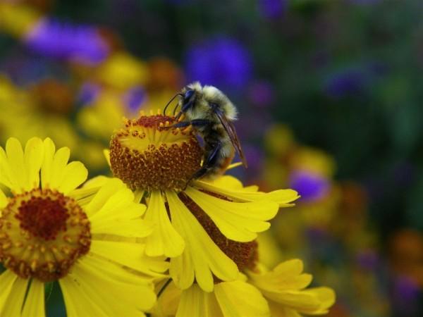 bee&flowers