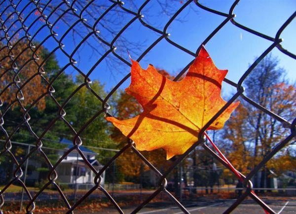 a autumn leave