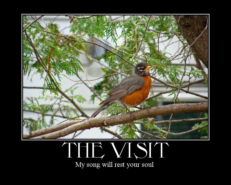 a bird capture