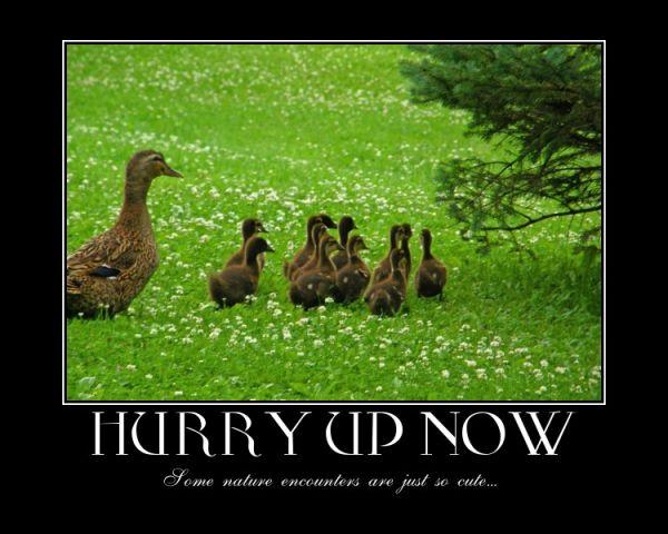 a duck capture
