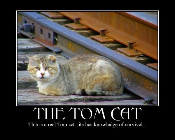 a cat capture