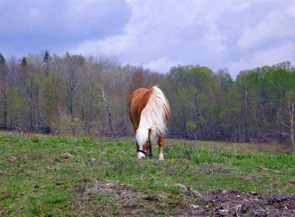 a horse capture