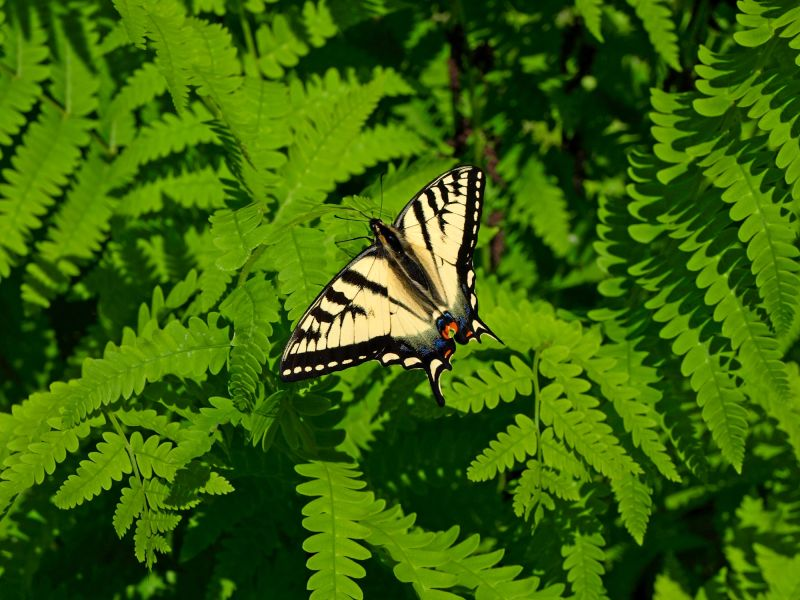 a butterfly capture