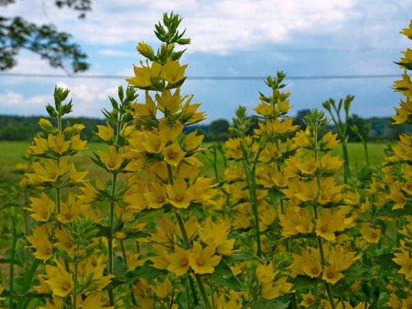 a flower capture