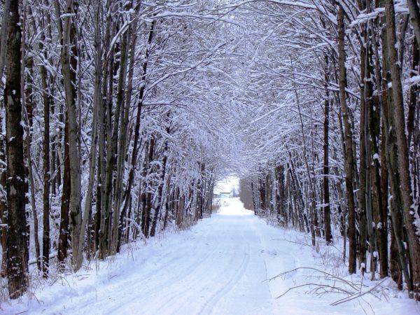 a trail caspture