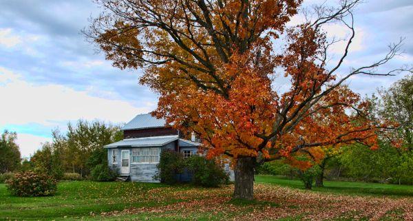 an autumn capture