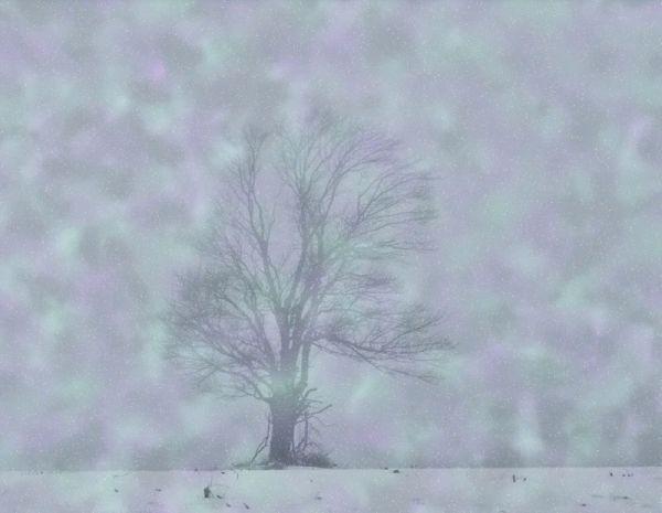 a fantasy tree