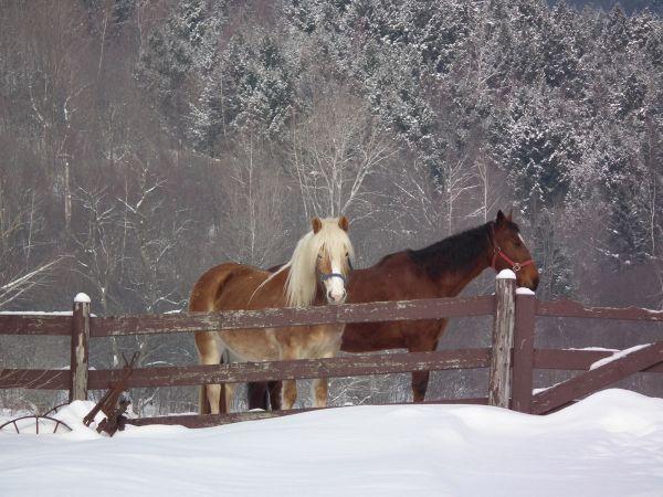 a horses capture