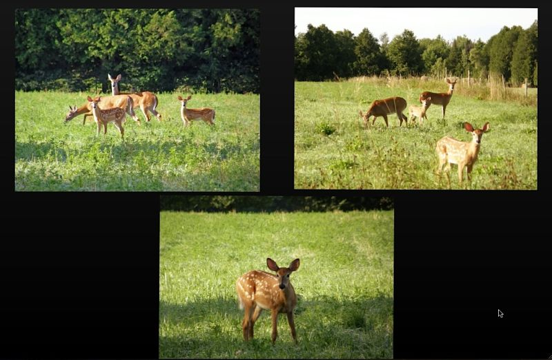 A family of deers