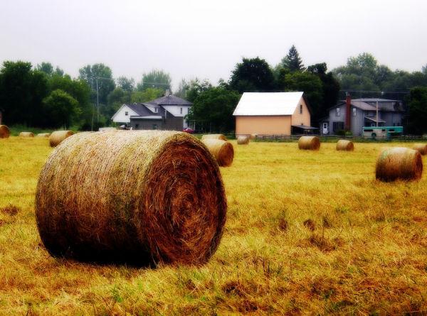 hay rolls capture