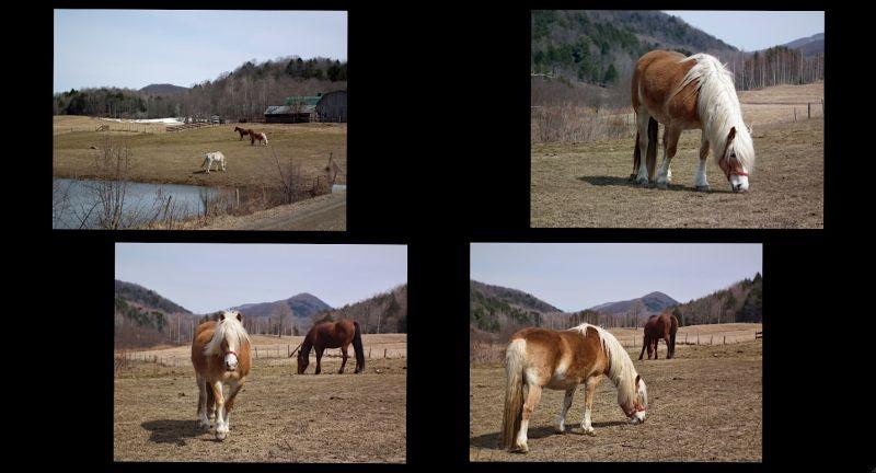 horses capture