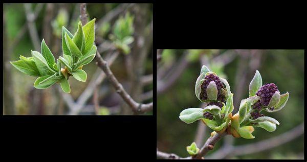 a spring capture