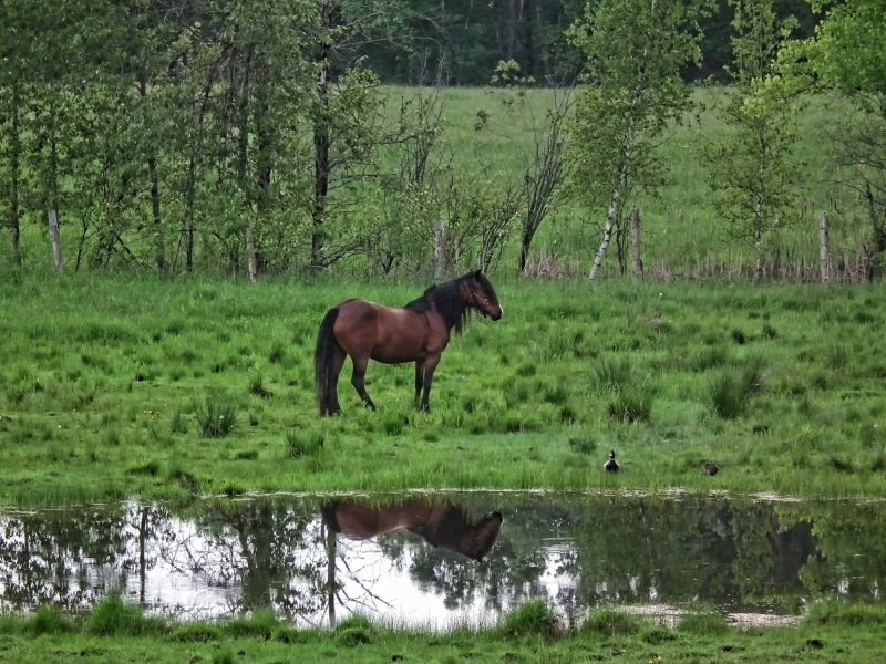 horse and duck capture