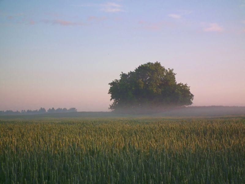 morning fog capture