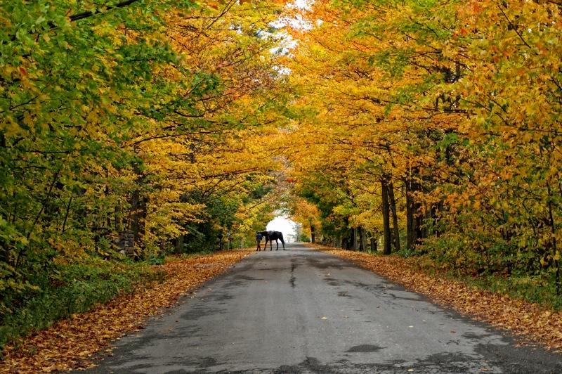 a autumn capture