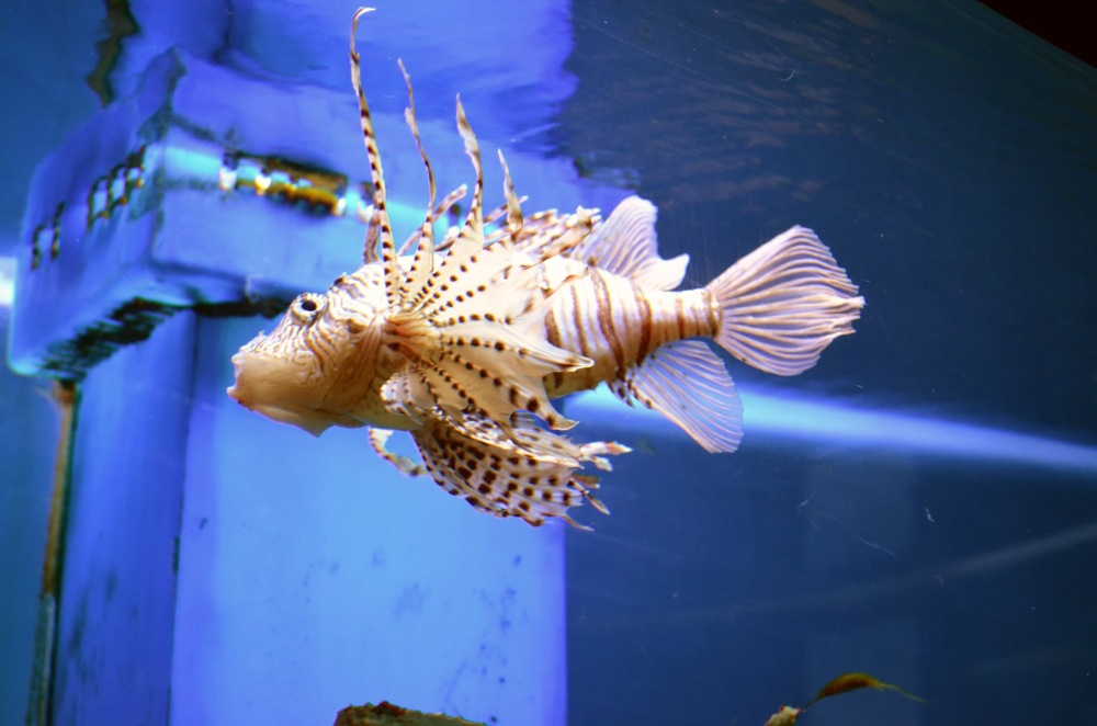 an aquarium capture