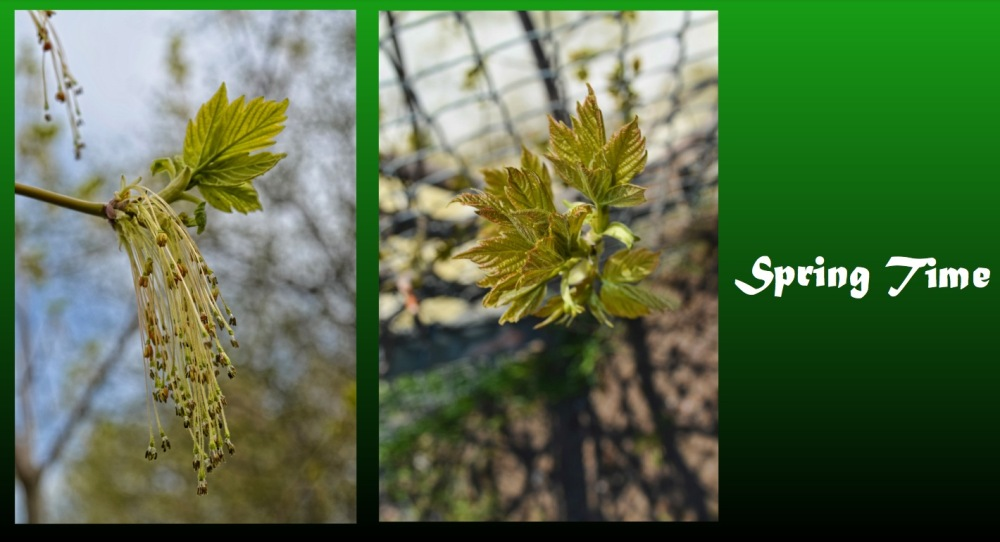 a leaf capture