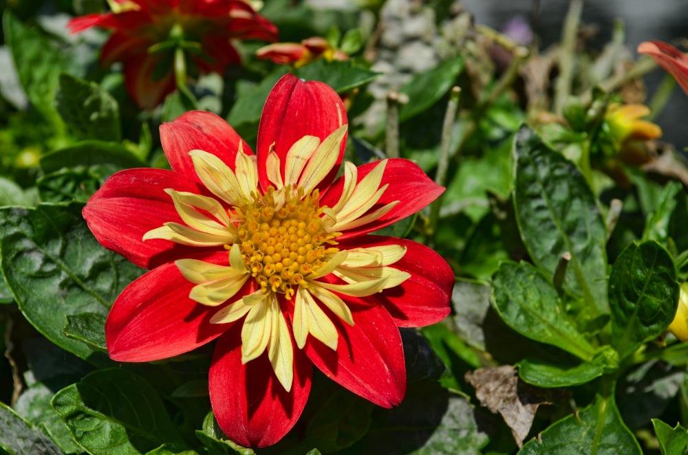 flowers capure