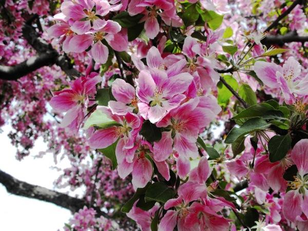 a blossoms capture