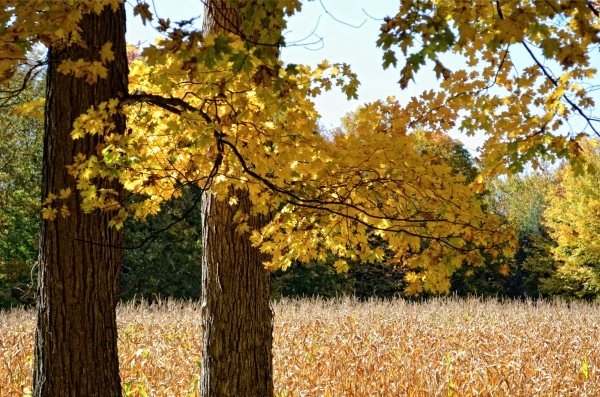 autumn capture