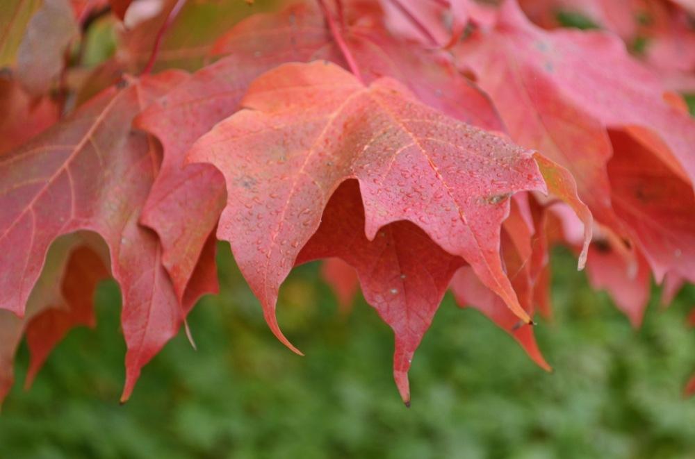 Autumn seson
