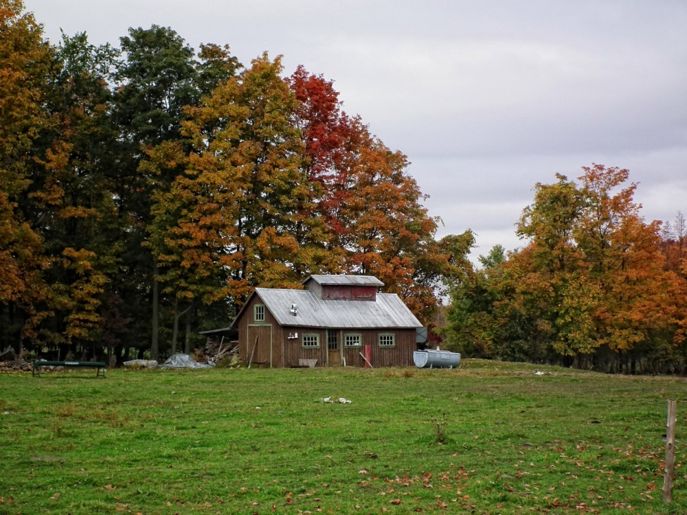 tool shed in autumn