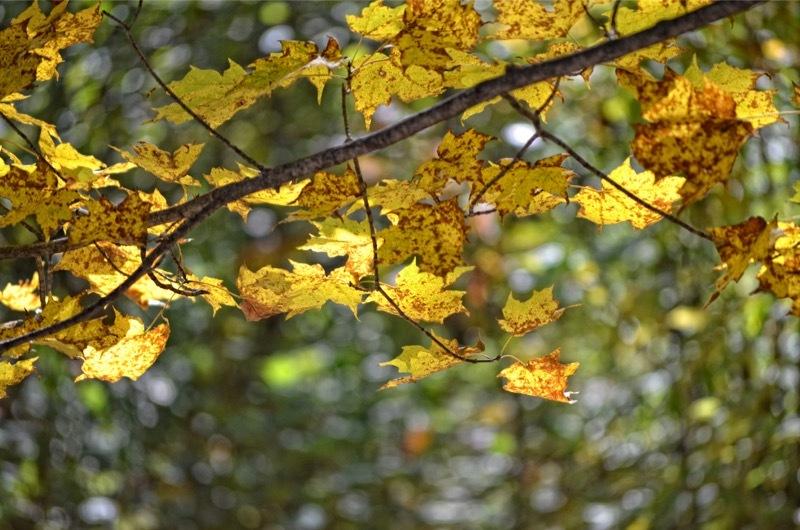 autumn poetry