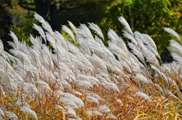grasse in the wind