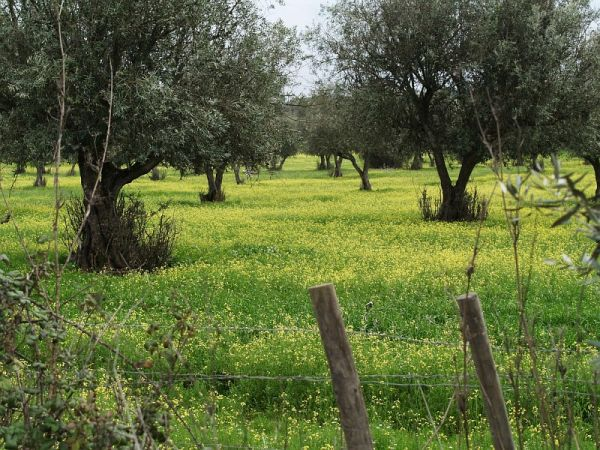 Alentejo in January