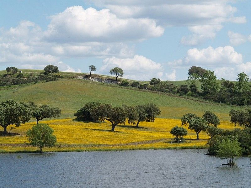 yellow in the landscape