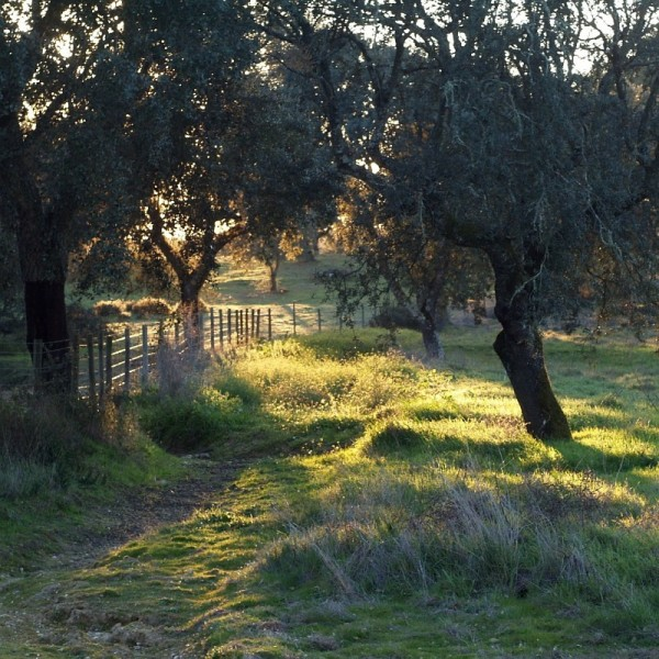 Winter at Alentejo