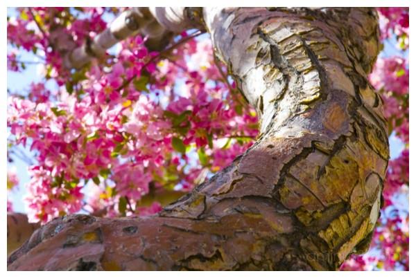 Spring Time V