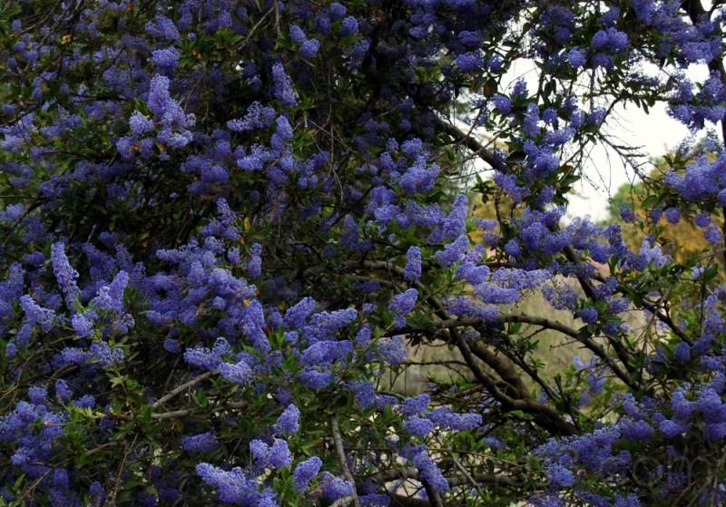 purple blue flowers