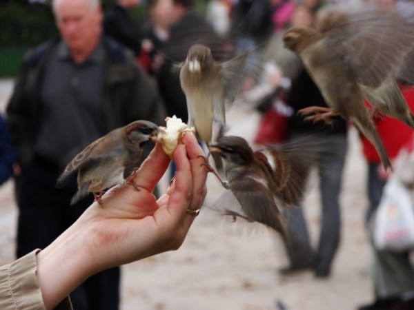 birds, eating from the hand
