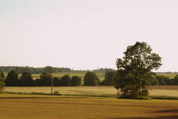 Järvamaa field