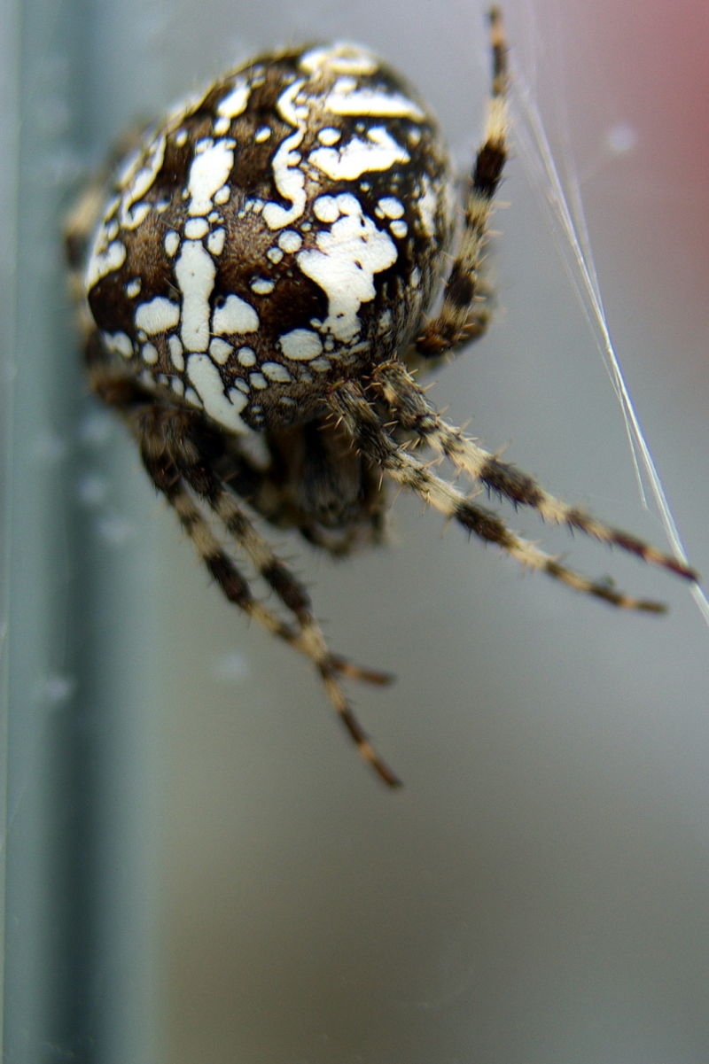 spider on the glass