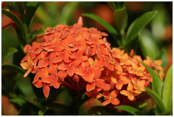 close-up image of the orange flower