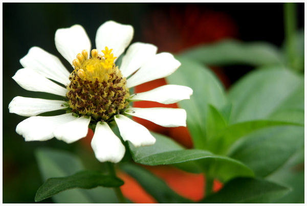 close-up image of the white flower