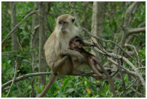 two monkeys together