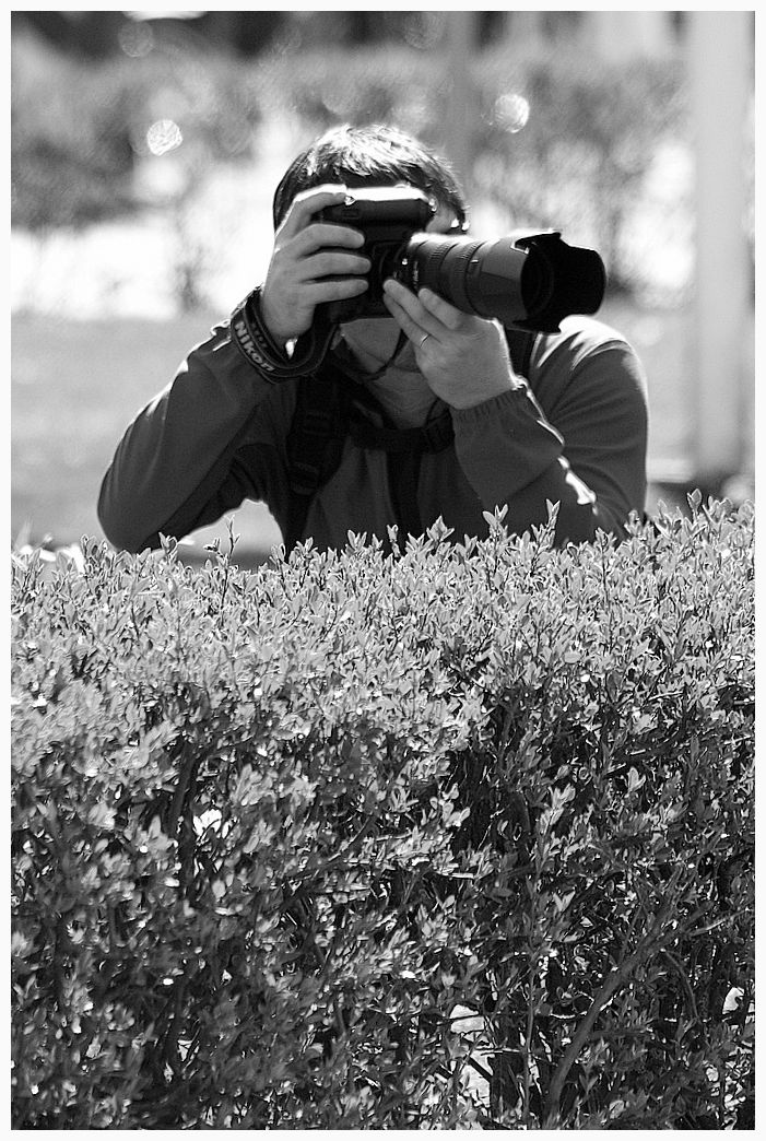 photographer behind the bushes