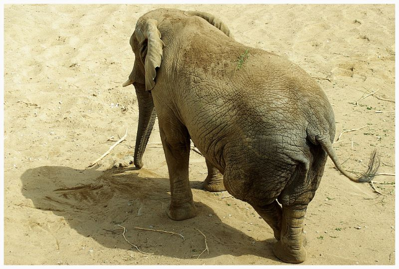 image of the elefant from the Tallinn Zoo