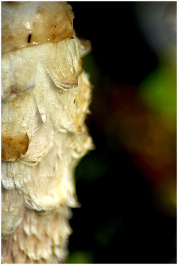 close-up image of the mushroom