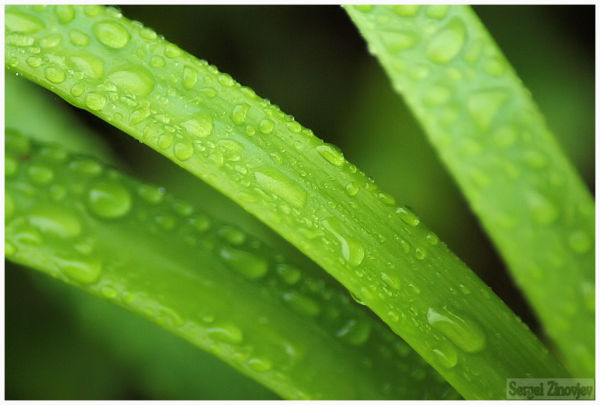 cclose-up image of the leaves with water drops
