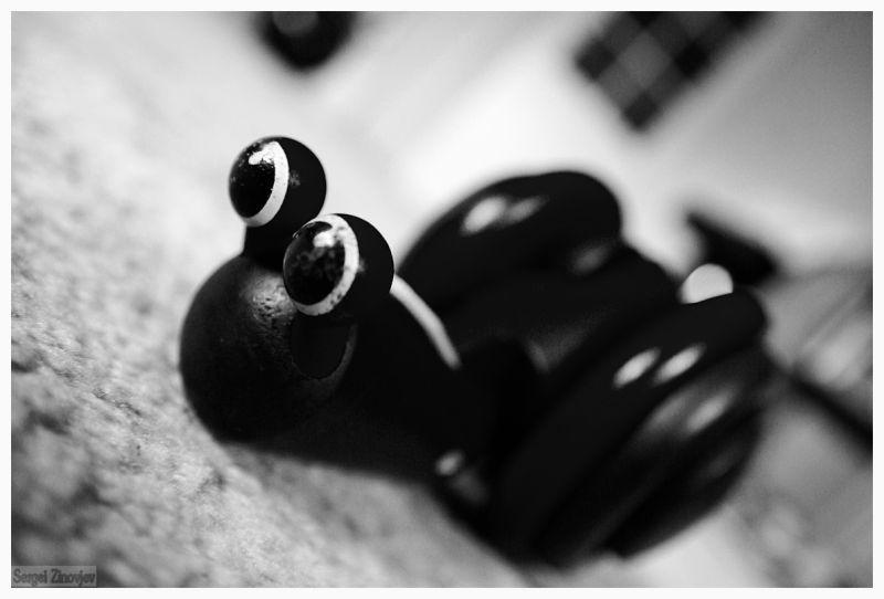 toy snail on the floor