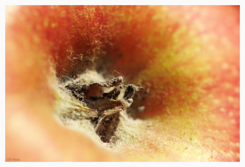 close-up of the apple