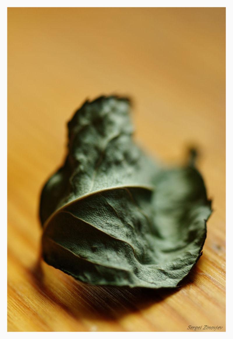 macro of dry leaf