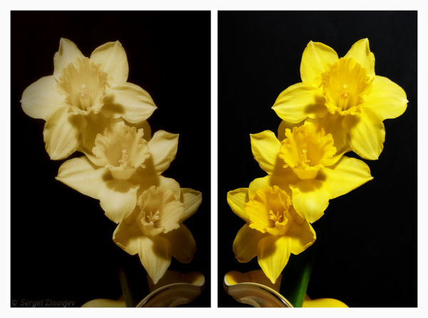 two images of the same flower in different styles