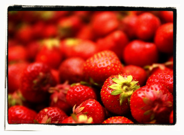 close-up of many strawberries